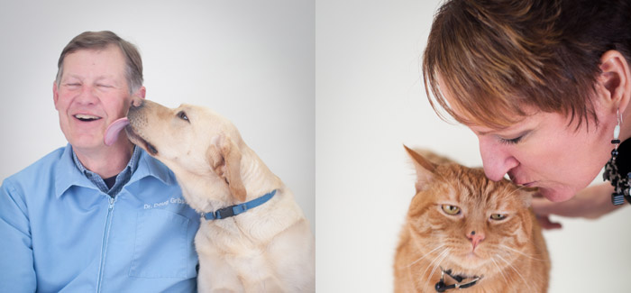 aloha dog and cat