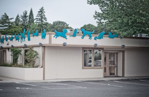 Aloha Dog Cat Hospital Beaverton Or